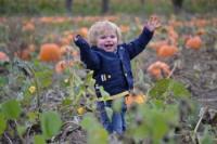 Fun Pumpkins