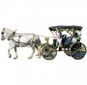 Crystal Falls Horse & Carriage