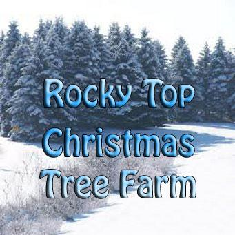 Rocky Top Christmas Tree Farm