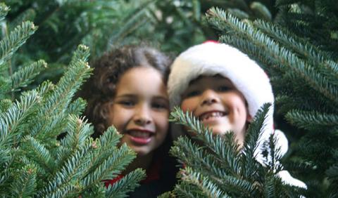 Where are Michigan's Best Christmas Tree Farms?