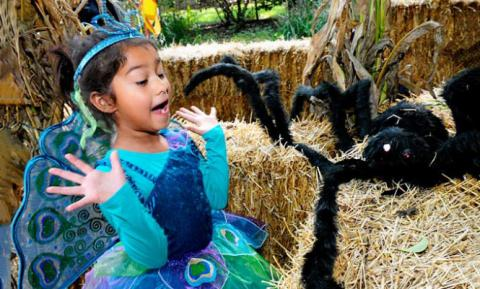 Little Girl in Halloween Custome