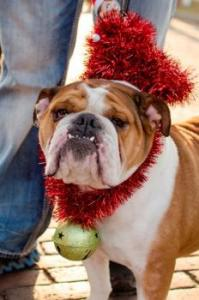 Reindog Holiday Parade in St Joseph Michigan