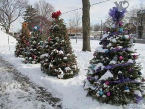 Walk of Trees in Kellogg Park Downtown Plymouth Michigan