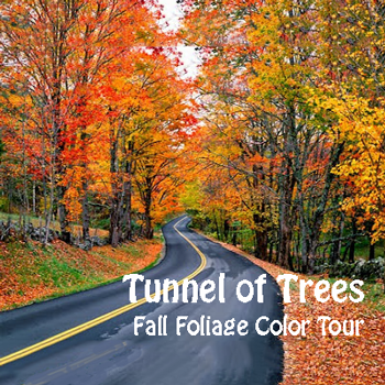 Tunnel of Trees Fall Foliage Color Tour on M-119 in Harbor Springs Michigan