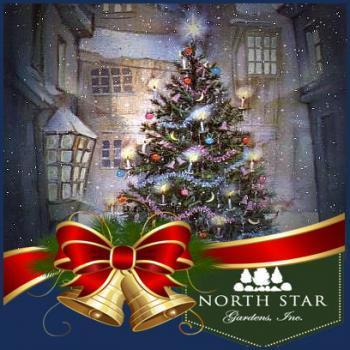 North Star Christmas Tree Farm in Wolverine Michigan