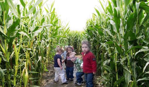 Michigan's Best Corn Mazes