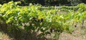 Pleasantview Vineyards