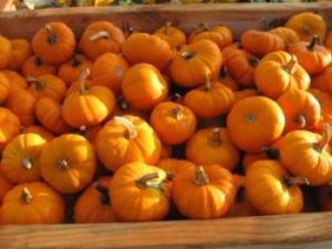 Sprague's Pumpkin Patch