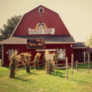 Blakes Halloween at Blake Orchard & Cider Mill in Armada Michigan
