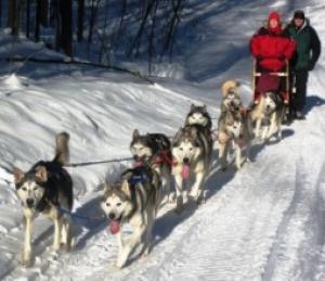 S & L Arctic K9's Dog Sled Adventure