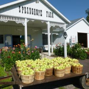 Springhope Farm in Galien Michigan